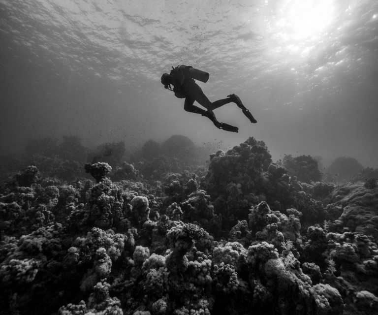 Lone-diver-